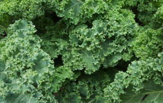 benefits-of-kale-feature-image