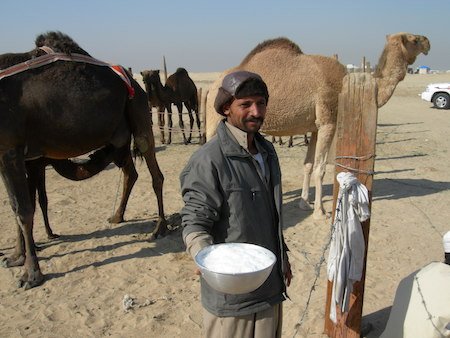 Camel milk for autism