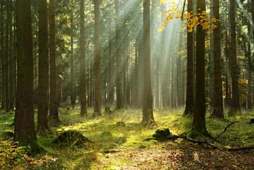 benefits-of-forest-bathing