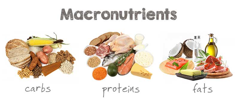 what are macronutrients & micronutrients? (and why you should care), Cephalic Vein