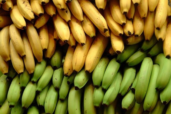 resistant-starch-3 (1)