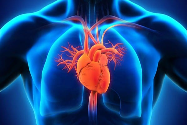 Vagus Nerve & Your Heart