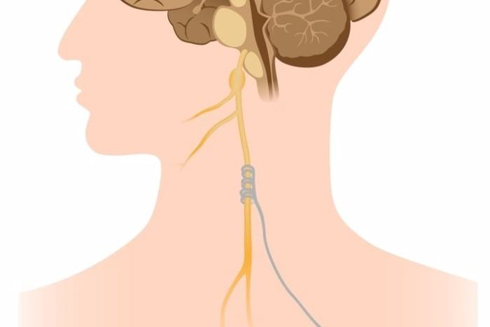 Vagus Nerve 101: How It Impacts Your Health + Why & How To Stimulate It