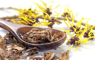 how-to-use-witch-hazel (1)