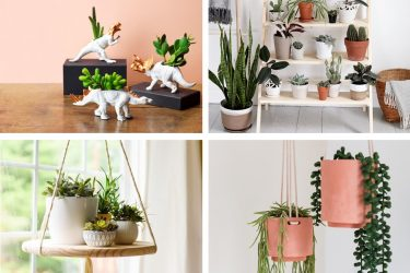 DIY Indoor Plant Ideas