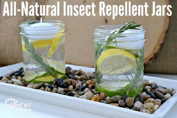 NATURAL INSECT REPELLENT JARS